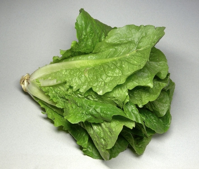 Romaine Lettuce, the ideal wrapper